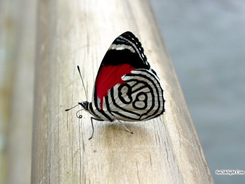butterflies-wallpapers-images-pictures-fun2delight.com-999978