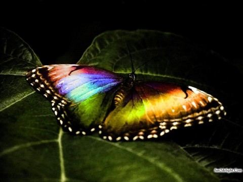 butterflies-wallpapers-images-pictures-fun2delight.com-999982
