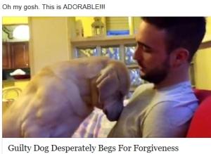 Dog seeks forgiveness